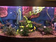 Aquarium 260 Liter