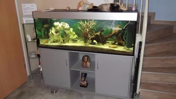 Jbl aquarium gebraucht kaufen nur noch 3 st bis 70 for Aquarium gebraucht