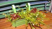 Balkonkästen, grün