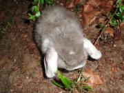 Bunny s in allen Farben