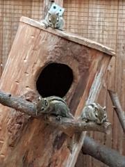 Chinesische Baumstreifenhörnen Jungtiere