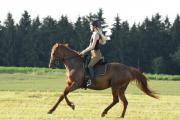 Erfahrene Reiterin (18)