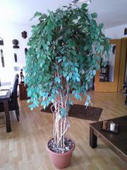 Ficus Benjamin Kunstpflanze