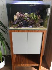 Fluval M60 Reef