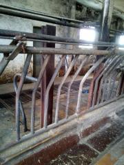 Fressgitter für Kühe