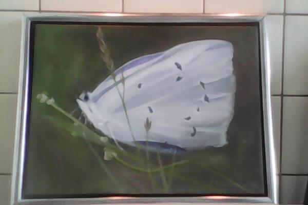 Gemalde schmetterling, Maler » Kunst, Gemälde, Plastik