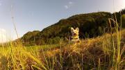 Hundebetreuung
