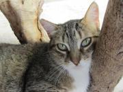 Josi - zuckersüßes Katzenmädchen