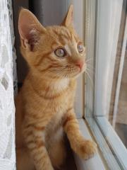 Kätzchen mit Zubehör