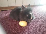 Kaninchen Babys abzugeben