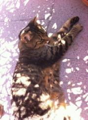 Katze Kimba vermisst
