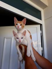 Katzenbabys mit Handicap