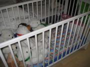 Kinderbettchen Ikea