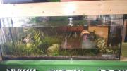 Komplettes Aquarium