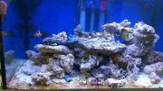 Meerwasser Fische Besatz