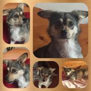 Melanie, kleines Hundemädchen