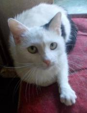 Missy, die Katze