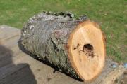 Natürliche Kirsch-Baumhöhle Natur-Stamm-Höhle Tier-Unterschlupf Brutmöglichkeit