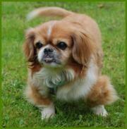 Patenhund: Be Lucky,
