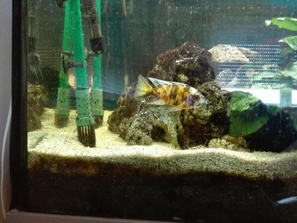 Wonderful Raumteiler Aquarium 150cm X 50 X70
