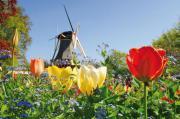 Reise Tulpenblüte Holland -