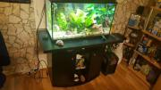 Süsswasseraquarium 120 liter