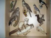 Tierpräparate Inklusive Glasvitrine