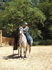 Ungarisches Sportpferd, Ausreitpferd,