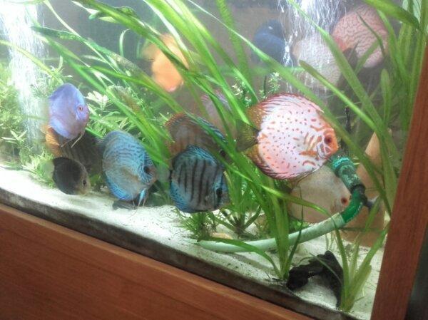 Whatsapp Gruppe Aquarium