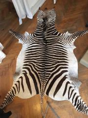 Zebrafell, Zebra