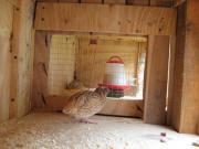 zu verkaufen Vogelkkefig