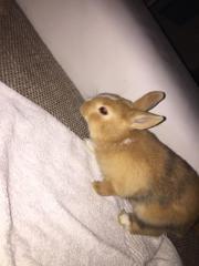 zutrauliche & aufgeweckte Kaninchen